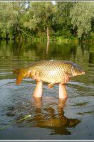 Peresi holtág – horgászat